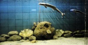 The Marine Aquarium and Research Center digha