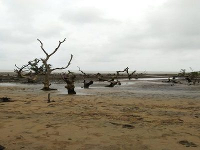 Bichitrapur Mangrove Forest – A must-see attraction while in Digha!